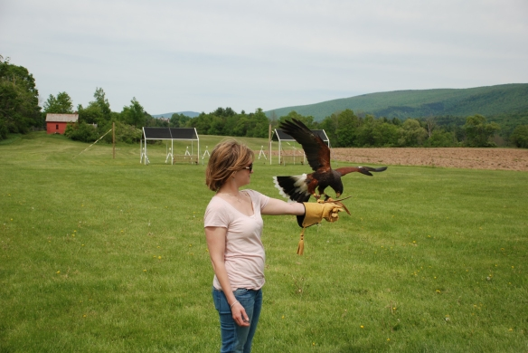 Learning the art of falconry.